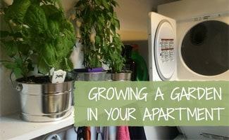 how to grow a garden in your apartment - Apartment Garden