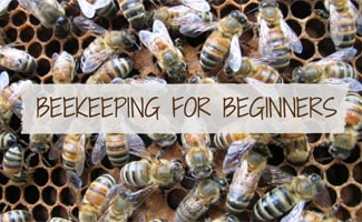 Bee hive: Beekeeping for Beginners