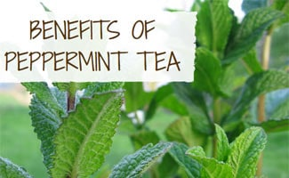 Mint Leaves: Benefits of Peppermint Tea