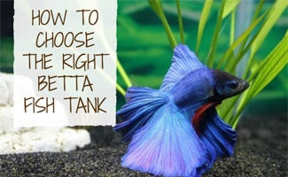 How To Choose The Best Betta Fish Tanks Earth S Friends