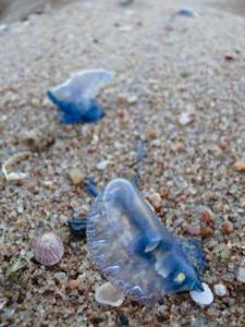 Pieces of bottle in sand