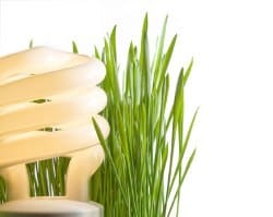 CFL bulb with grass