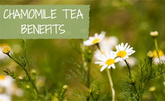 Chamomile Plant: Chamomile Tea Benefits