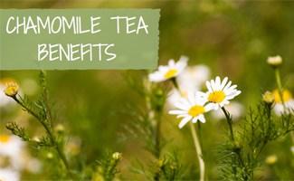 Chamomile Plant: Chamomile Tea Benefits