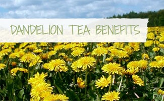 Dandelion Tea Benefits: Dandelion flowers in a field