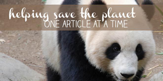 Panda bear: helping save the planet