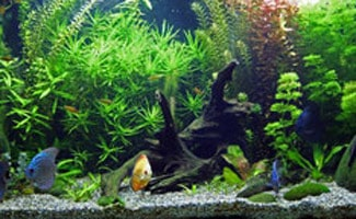 The Ultimate Guide To Freshwater Aquarium Fish
