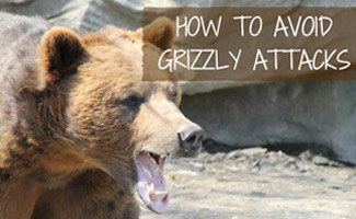 How to Avoid Grizzly Bear Attacks