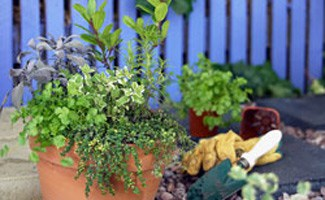 Herb garden at home