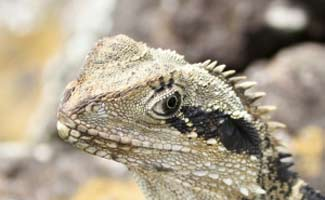 All About Monitor Lizards