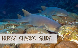 Nurse Sharks in the ocean