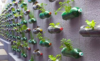 Plastic bottles as a garden