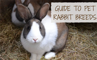 Two pet rabbits in hay: Guide to Pet Rabbit Breeds