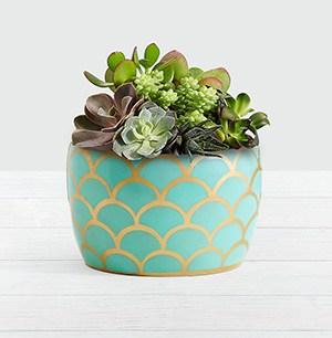 ProFlowers plant