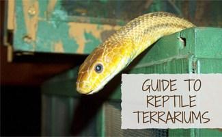 Snake in a crate: Reptile Terrarium Guide