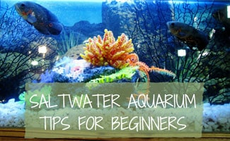 Saltwater tank with fish: Saltwater Aquarium for Beginners