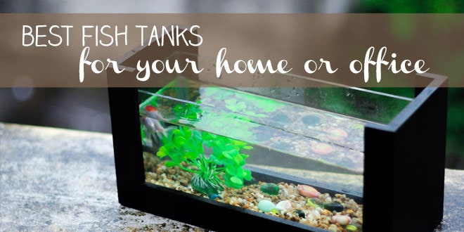 Best Fish Tank for Your Home or Office