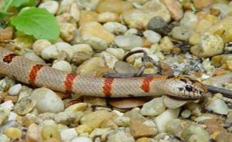 poisonous snakes hail from all over the world