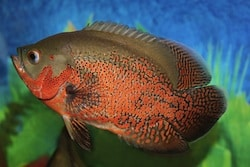 The Ultimate Guide To Freshwater Aquarium Fish