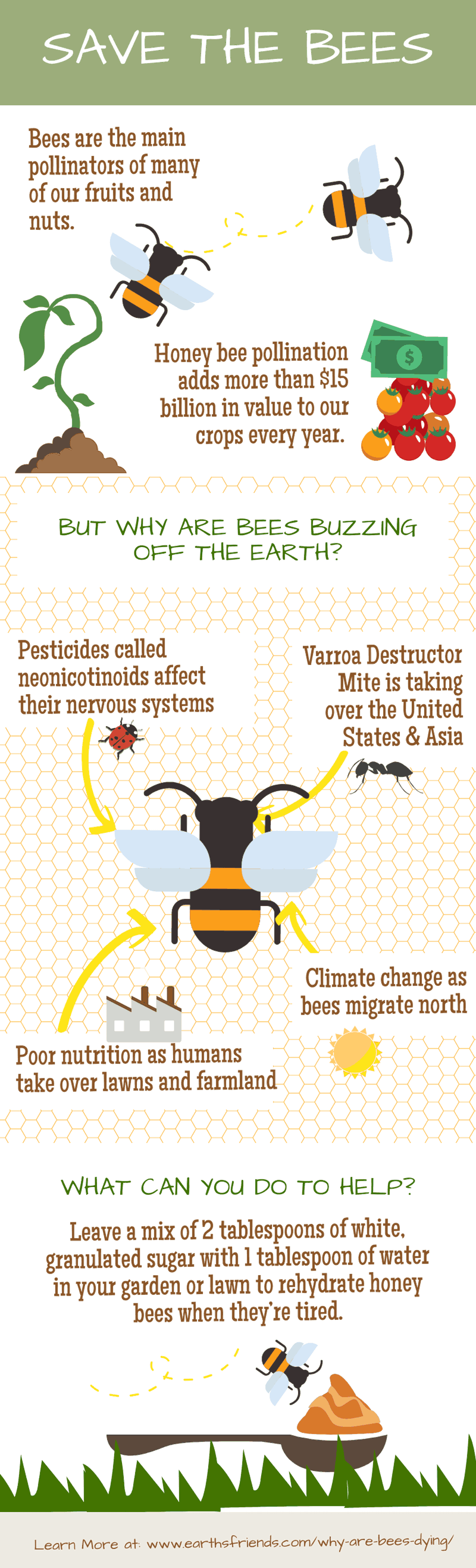 Why Are Bees Dying Infographic