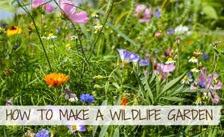 wildflowers in the sunshine (text in image: How To Make A Wildlife Garden)